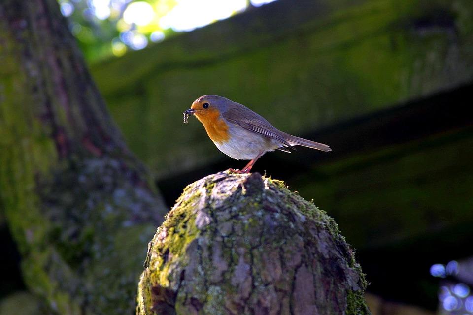 Early bird -ilmoittautuminen Vapaaehtoistoiminnan messuille alkaa 1.4.